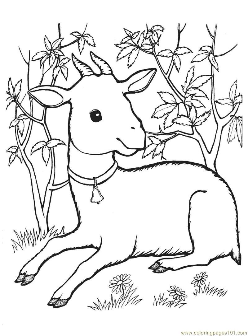 goat pictures to color free printable goat coloring pages for kids goat to color pictures