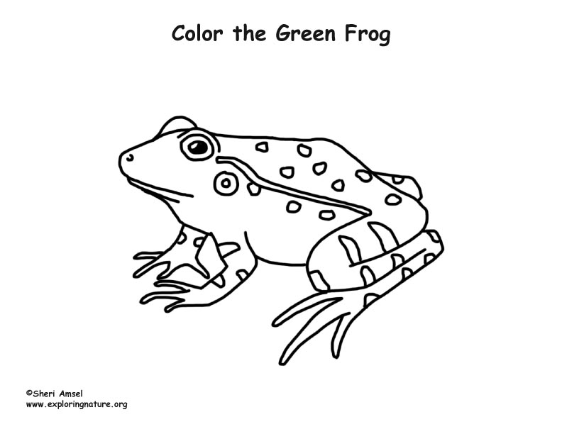 green tree frog coloring page environmental coloring sheets minnesota pollution page coloring frog tree green