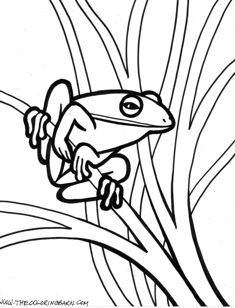 green tree frog coloring page free frog coloring pages frog page green tree coloring