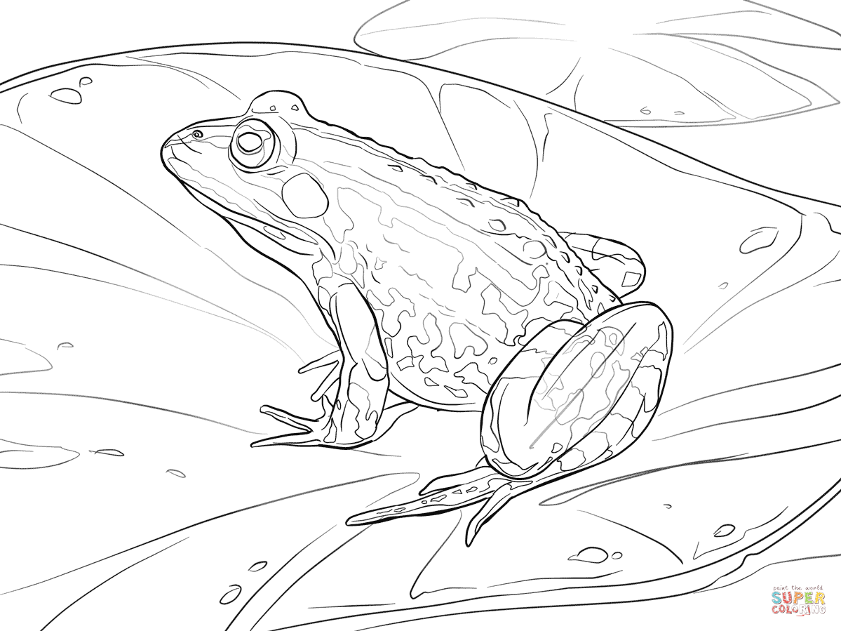 green tree frog coloring page green tree frog coloring page coloring page tree frog green