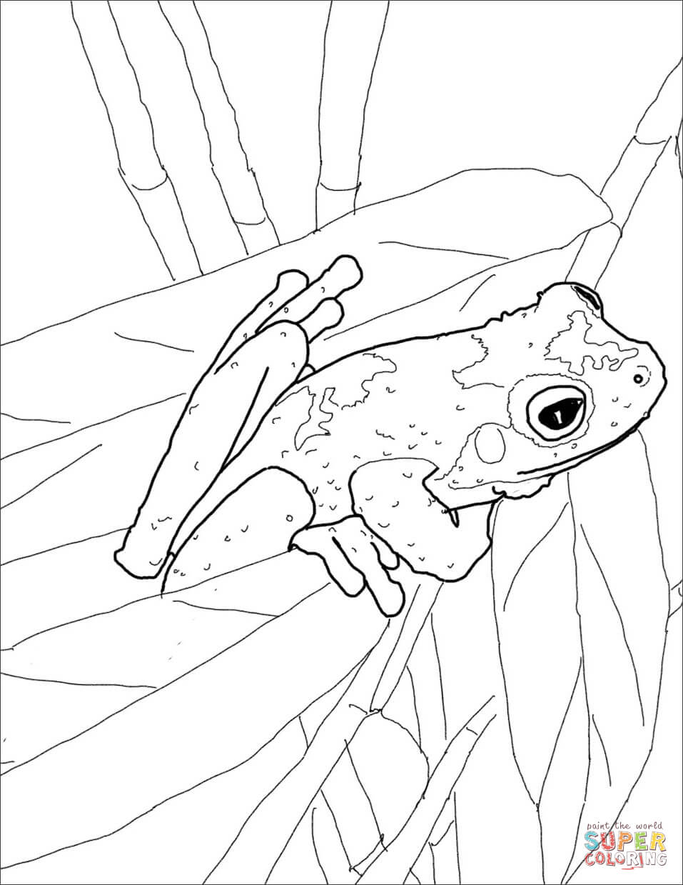 green tree frog coloring page tree frog coloring page free printable coloring pages tree coloring frog green page
