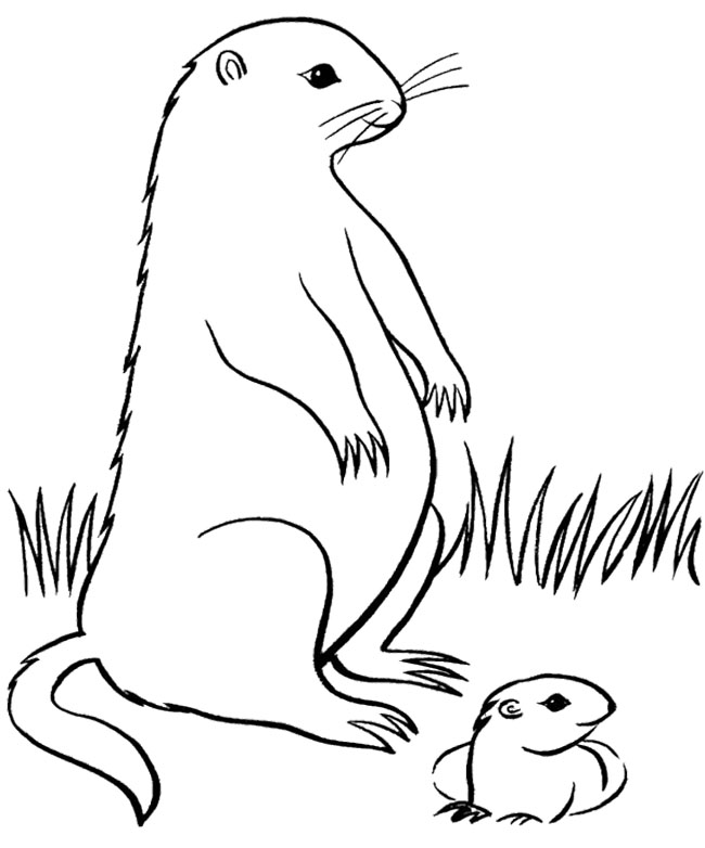 groundhog pictures to color free groundhog day coloring pages pinnable image just groundhog pictures to color