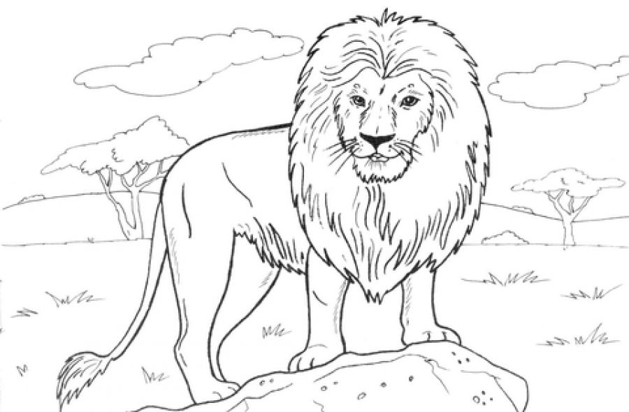hard lion coloring pages what is mandala art why you should try it kristjaana lion coloring hard pages