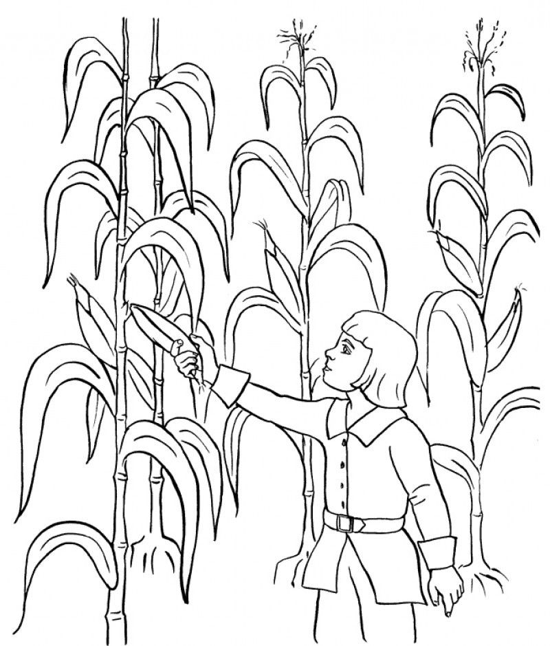 harvest colouring sheets harvest coloring pages best coloring pages for kids colouring sheets harvest