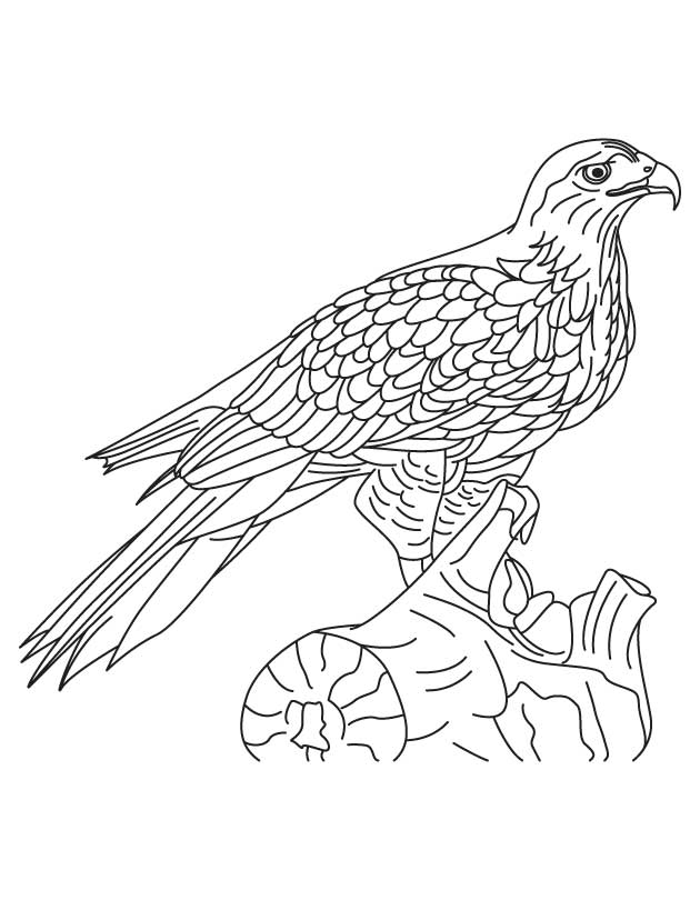 hawk coloring pages hawk coloring page art starts for kids hawk pages coloring
