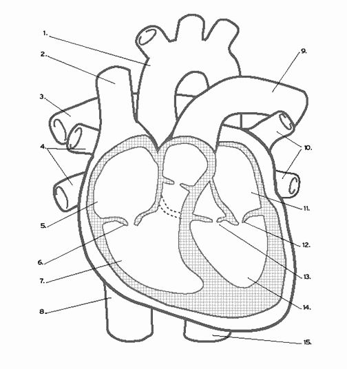 heart coloring worksheet heart tracing worksheet printable tracing shapes coloring worksheet heart