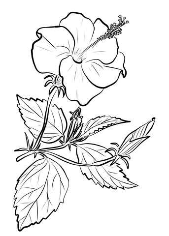 hibiscus coloring page faerlmarie coloring pages 32 hibiscus flower coloring pages hibiscus page coloring