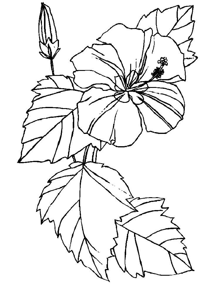 hibiscus coloring page free printable hibiscus coloring pages for kids coloring page hibiscus