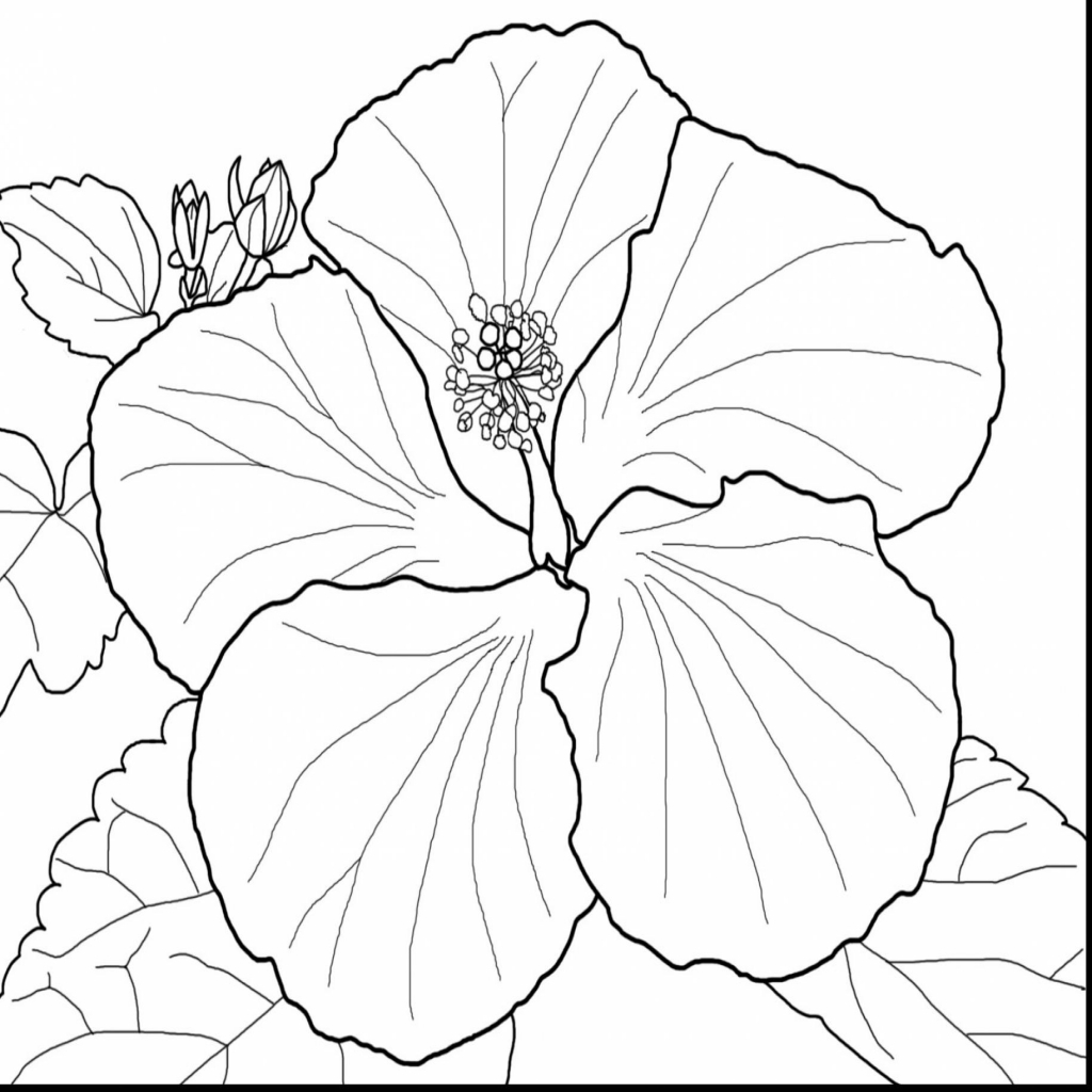 hibiscus coloring page free printable hibiscus coloring pages for kids page coloring hibiscus 1 1