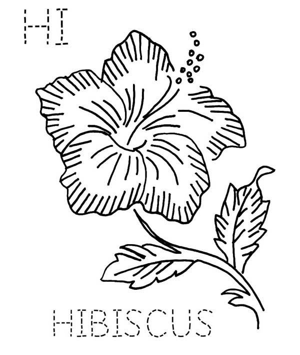 hibiscus coloring page h is fro hibiscus flower coloring page color luna page coloring hibiscus