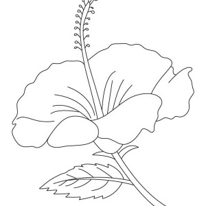 hibiscus coloring page hibiscus coloring download hibiscus coloring for free 2019 coloring page hibiscus