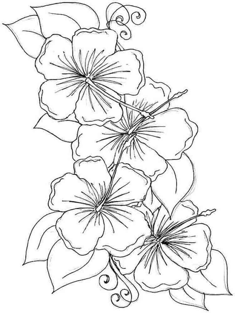 hibiscus coloring page hibiscus flower coloring page clipart best coloring hibiscus page