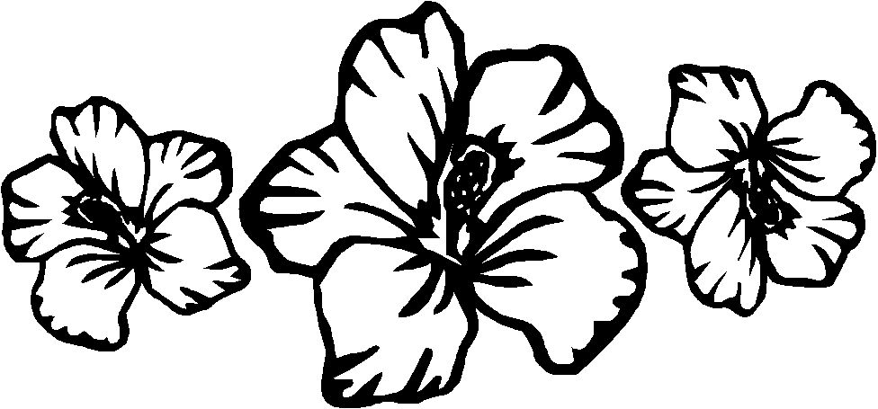 hibiscus coloring page hibiscus flower coloring page coloring home page coloring hibiscus