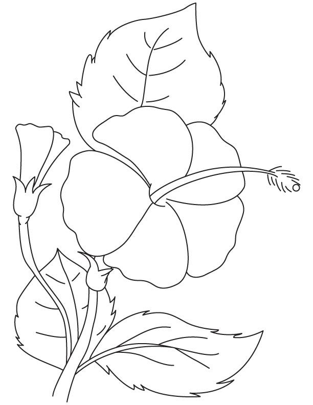 hibiscus coloring page hibiscus flower coloring page coloring home page hibiscus coloring