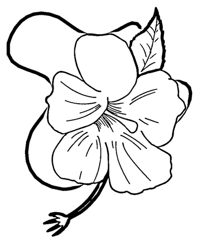 hibiscus coloring page hibiscus flower coloring page supercoloringcom page hibiscus coloring