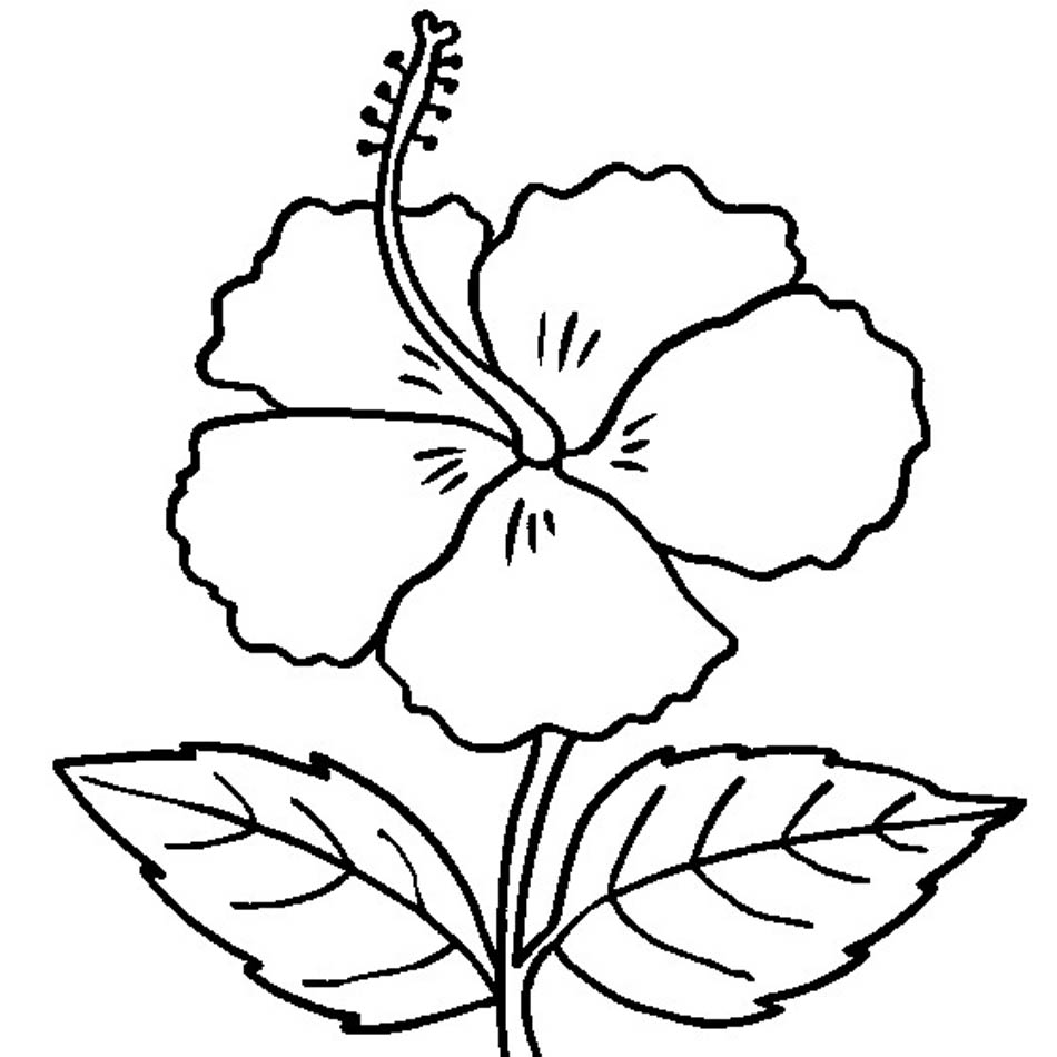 hibiscus coloring page hibiscus flower coloring page woo jr kids activities page hibiscus coloring
