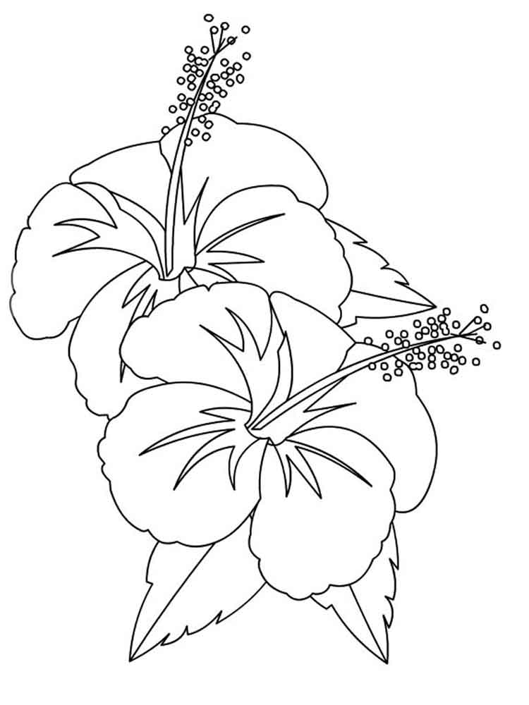 hibiscus coloring page hibiscus flower coloring pages download and print hibiscus page coloring