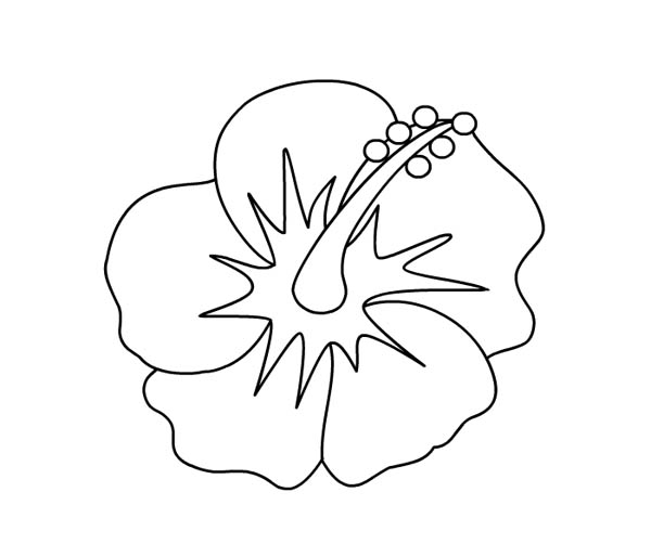 hibiscus coloring page hibiscus flower picture coloring page color luna page coloring hibiscus