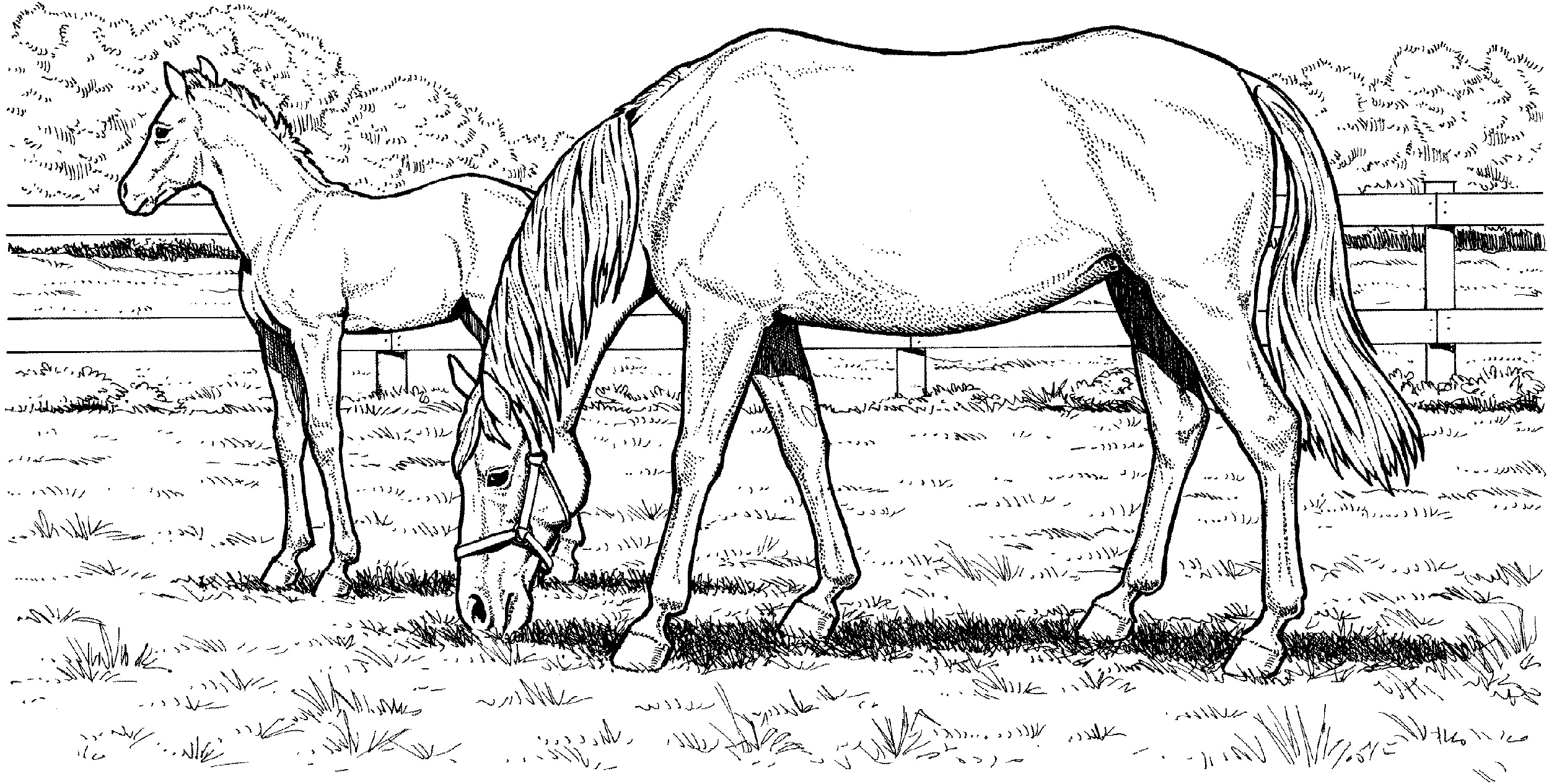 horse coloring book pages realistic horse coloring pages to download and print for free horse coloring pages book