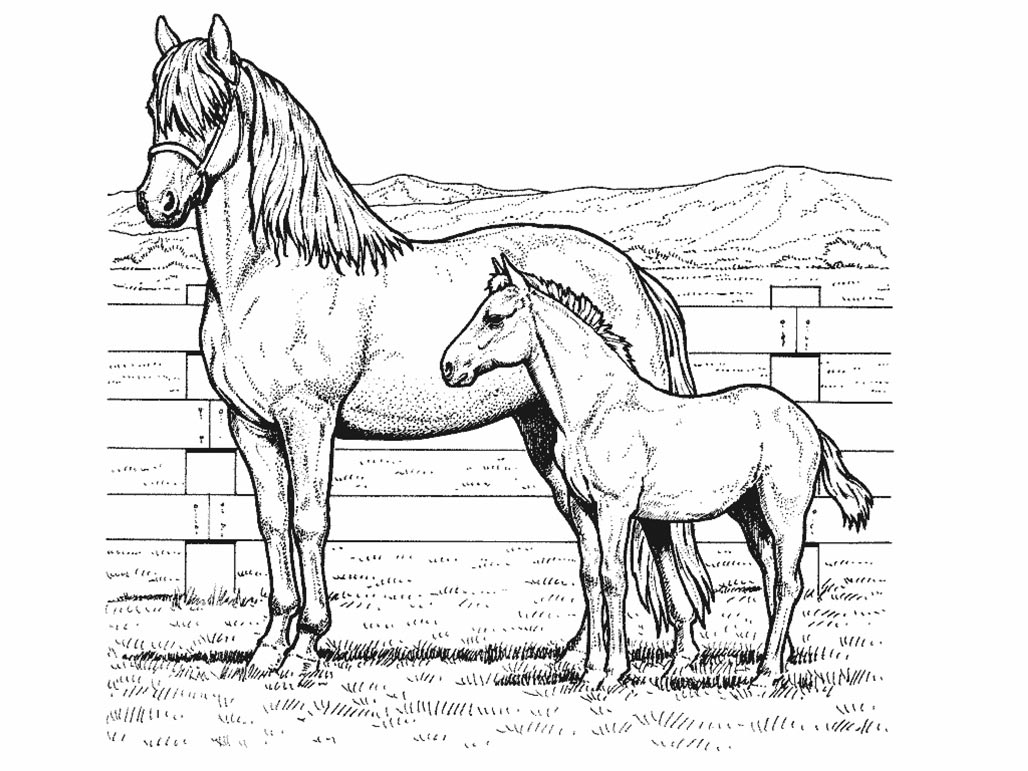 horse coloring realistic horse coloring pages to download and print for free coloring horse