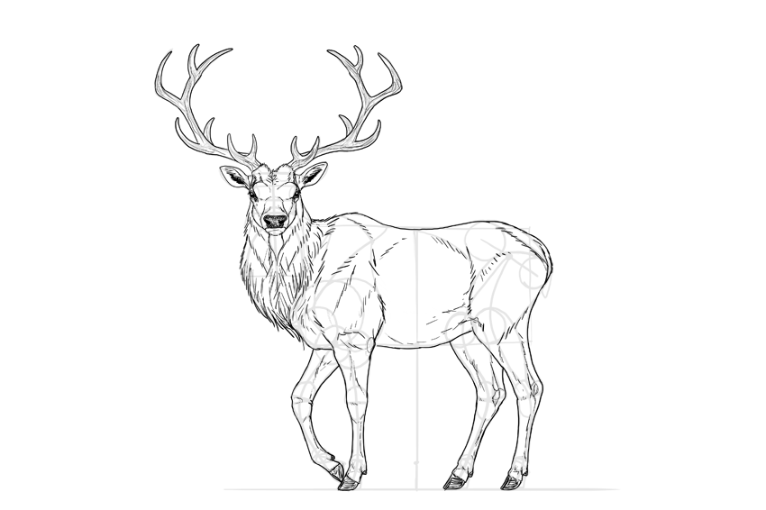 how to draw a buck deer sketch drawing at getdrawings free download buck a how draw to