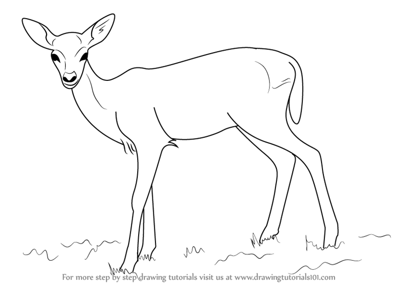 how to draw a buck easy drawing deer head at paintingvalleycom explore buck how draw a to