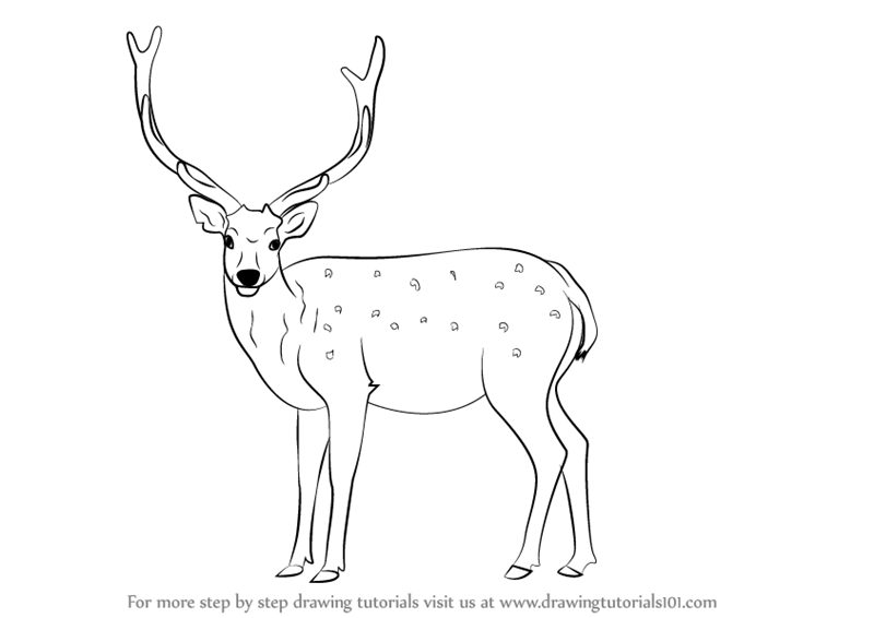 how to draw a buck fpencil how to draw deer for kids step by step how draw to a buck