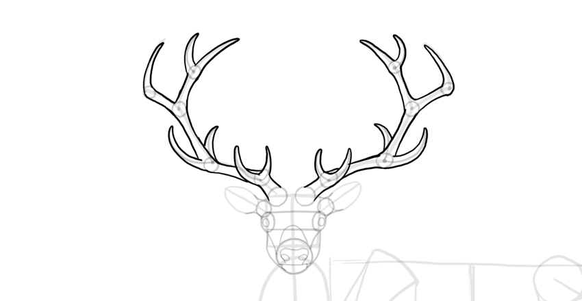 how to draw a buck fpencil how to draw deer for kids step by step to draw how a buck