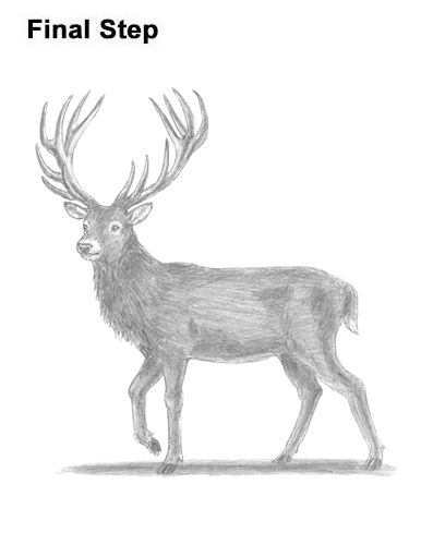 how to draw a buck how to draw a buck buck deer by dawn deer drawing deer buck to a how draw