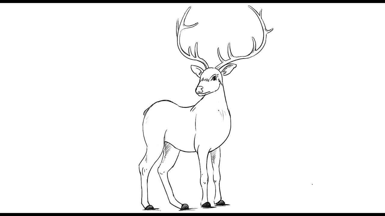 how to draw a buck how to draw a buck drawingnow to buck a how draw