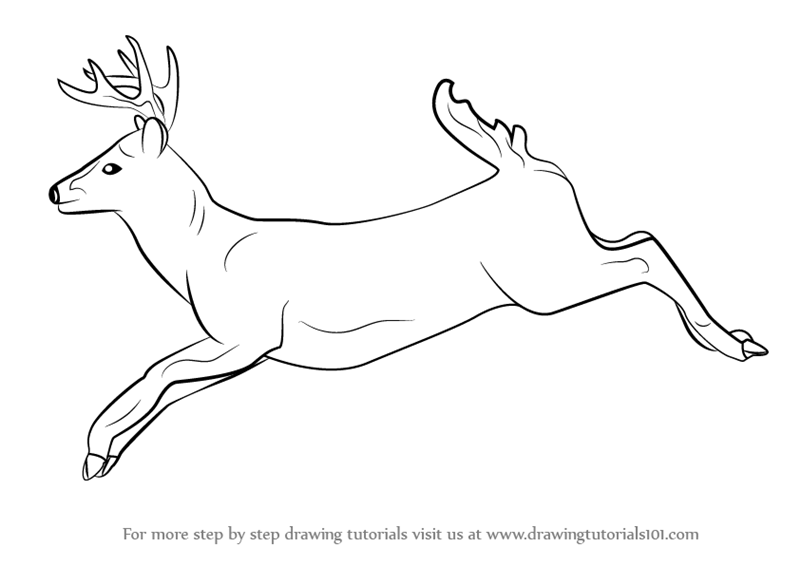 how to draw a buck how to draw a buck step by step forest animals animals buck how draw a to