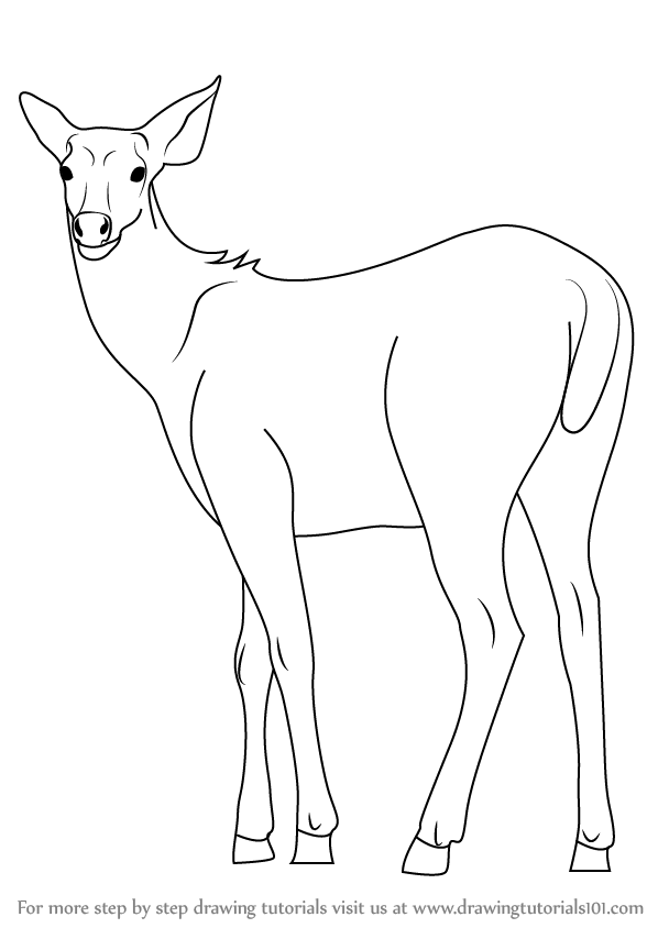 how to draw a buck how to draw a deer a how buck to draw