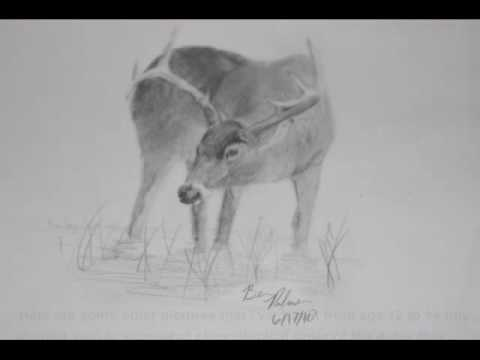how to draw a buck how to draw a deer cartoon video step by step pictures draw to buck how a