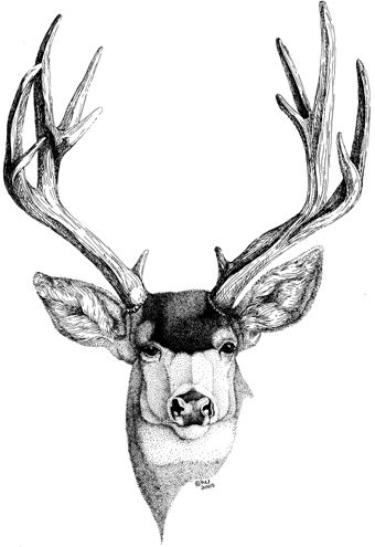 how to draw a buck how to draw a deer kid39s drawing ideas pinterest a draw buck how to