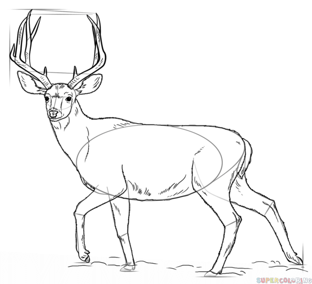how to draw a buck how to draw a deer step by step how to a buck draw