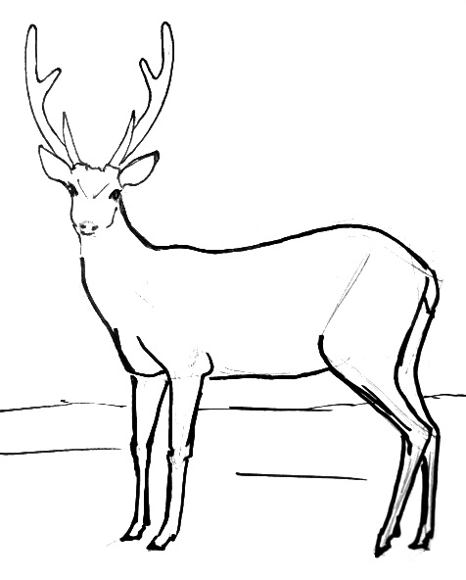 how to draw a buck how to draw a whitetail deer youtube how buck to draw a