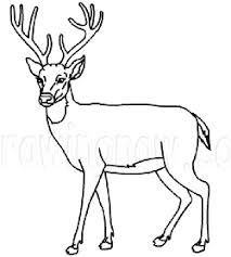 how to draw a buck how to draw deer drawing tutorials drawing how to to draw buck a how