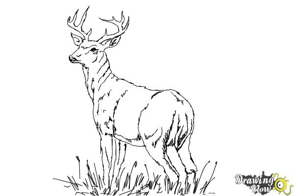how to draw a buck image result for how to draw a deer deer drawing deer draw a how to buck