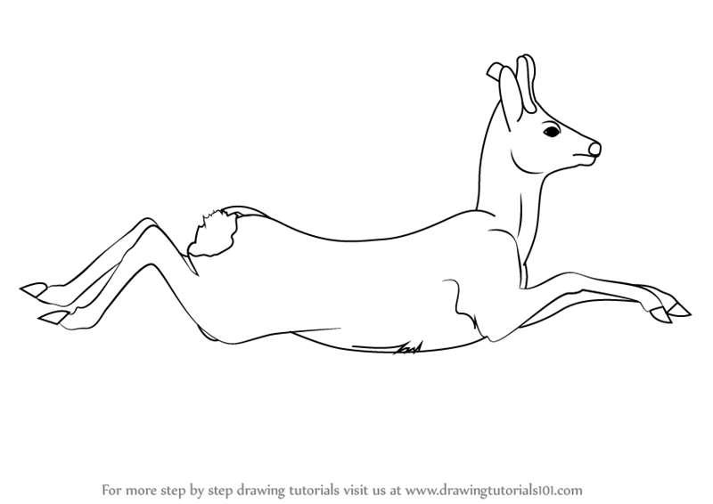 how to draw a buck learn how to draw a deer 15 easy tutorials and drawings draw how to buck a
