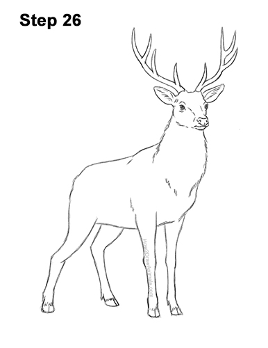 how to draw a buck learn how to draw a roe deer wild animals step by step buck draw a to how
