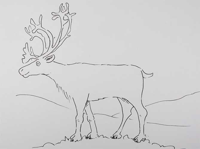 how to draw a buck learn how to draw a sambar deer wild animals step by draw how buck a to