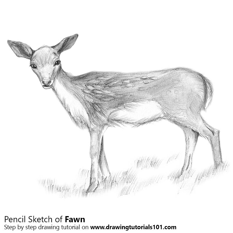 how to draw a buck learn how to draw a sika deer wild animals step by step a to draw how buck