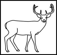 how to draw a buck learn how to draw a white tailed deer wild animals step a how to draw buck