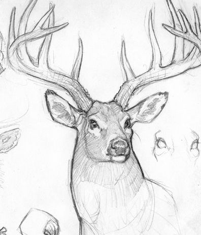 how to draw a buck pk draw how to draw a deer youtube buck how draw to a