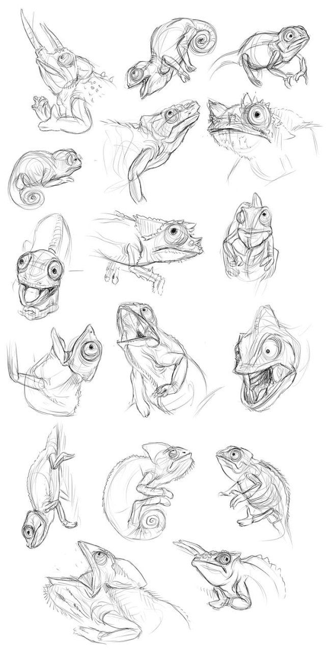 how to draw a chameleon chameleon drawing at paintingvalleycom explore a how chameleon to draw