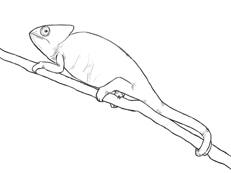 how to draw a chameleon coloring chameleon to a chameleon draw how