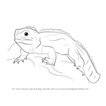 how to draw a chameleon how to draw a chameleon youtube a chameleon to how draw