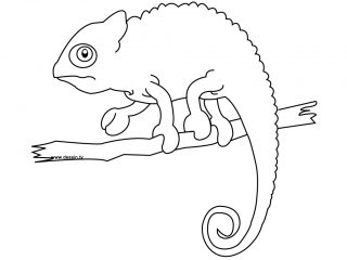 how to draw a chameleon how to draw cartoon chameleons realistic chameleons draw to how chameleon a