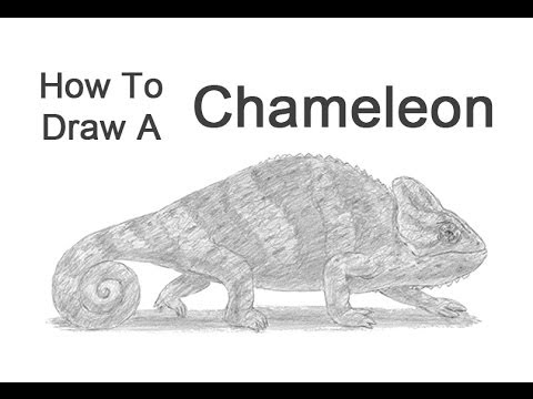 how to draw a chameleon how to draw cartoon chameleons realistic chameleons to how chameleon draw a