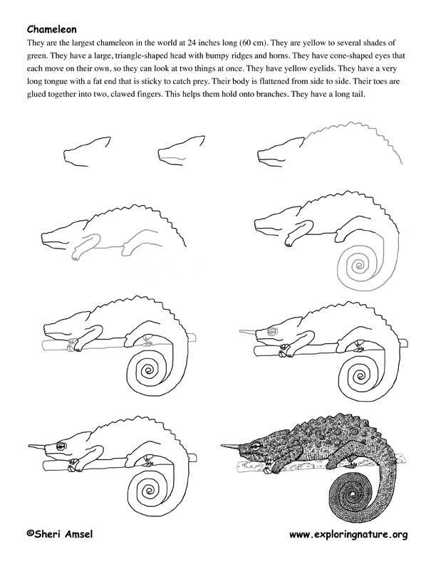 how to draw a chameleon image result for basic drawing of chameleon easy a to draw chameleon how